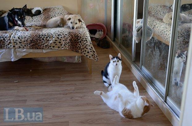 Куда ни глянь - всюду котик. Или собачка