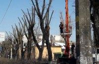 Київрада заборонила кронування дерев