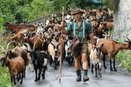 Скоты и власть