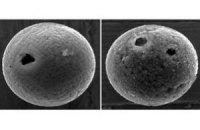 Ученые нашли самые древние метеориты