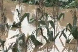 Растет число жертв наводнения в Южном Китае