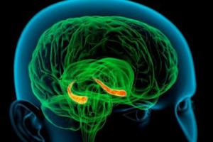 Ученые открыли механизм положительного влияния никотина на память