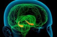 Учені відкрили механізм позитивного впливу нікотину на пам'ять