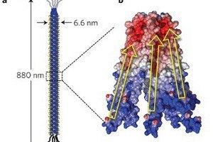 Ученые превратили вирусы в источник энергии