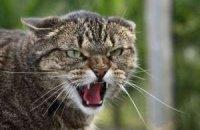 Четверо человек пострадали от нападения бешеного кота