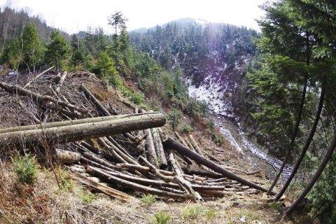 Гослесагентство отвергло связь между вырубкой Карпат и паводком