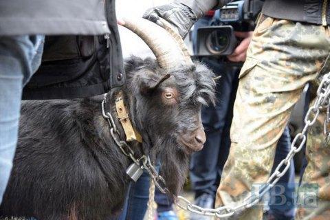 Націоналісти привели під посольство Чехії в Києві чорного цапа