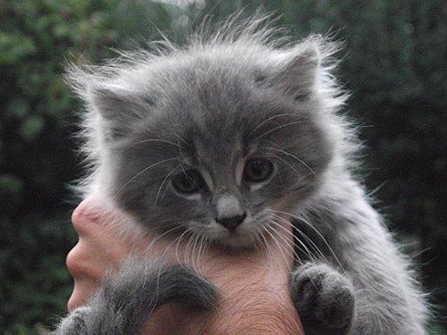 Котята - любимцы Евгения из Боярки