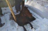 Во Львовской области пожарные вытащили из канализационной ямы лошадь