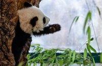 П'ятнична панда #175