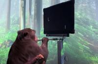 """Стартап Маска показал обезьяну, которую научили играть в видеоигры """"силой мысли"""""""