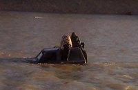 Двое парней на внедорожнике застряли посередине реки в Ужгороде
