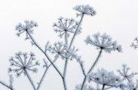 Зима в Киеве продолжает бить температурные рекорды