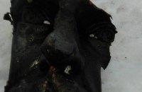В Стрые поймали вандалов, похитивших голову памятника Шевченко