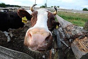 Изменение дотаций привело к снижению поступлений молока