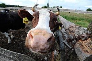 Литвин озаботился чистотой породы животных