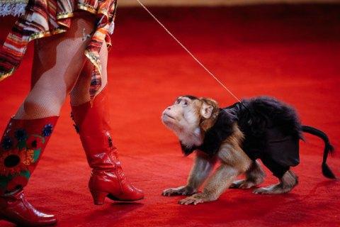 Минприроды вынесло на Кабмин законопроект о цирке без диких животных