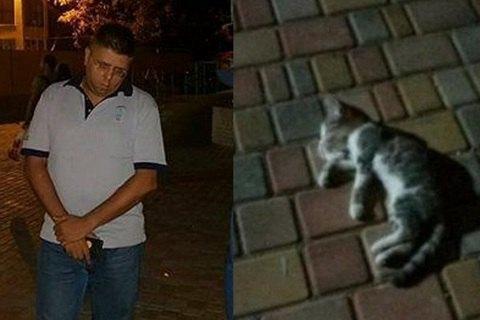 В Одесі батько викинув кошеня дочки з 14 поверху