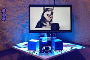 Украинцы собрали $251 тыс. на создание гаджета для домашних животных