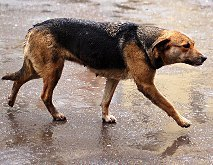 У Дніпропетровську пропонують чипувати бездомних тварин