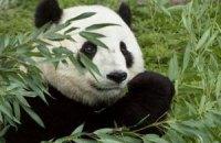 Пятничная панда #170