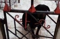 У Харківській області ротвейлер вирвався з вольєра і загриз 4-річну дитину