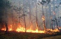 У Херсонській області пожежа пошкодила 140 гектарів лісу