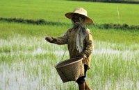 Россия погасила перед Таиландом рисовый долг
