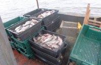 В Южном Буге и Днестровском водохранилище запретили промышленный лов рыбы