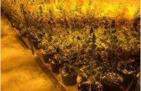 Полицейские обнаружили в Полтавской области ангар с саженцами канабиса