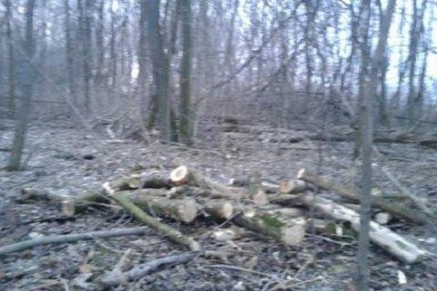 Біля Білої Церкви зупинили незаконне вирубування лісу
