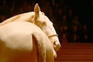 В Лермонтовском музее показывают конный балет
