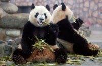 Пятничная панда #127