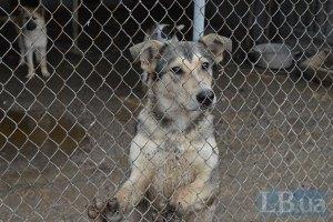 У Київській області згорів притулок для собак