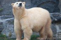 У Росії на архіпелазі з ядерним полігоном запровадили режим НС через нашестя білих ведмедів