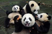 Пятничная панда #32