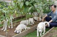 Президент Южной Кореи предложил запретить есть собак