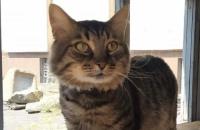 В Днепре уличный кот получил работу в историческом музее