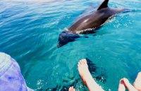 В Харьков перевезли донецких дельфинов и котиков