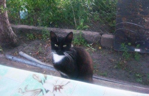 Николай Петренко из Полтавы прислал нам фото кота. Это он год назад