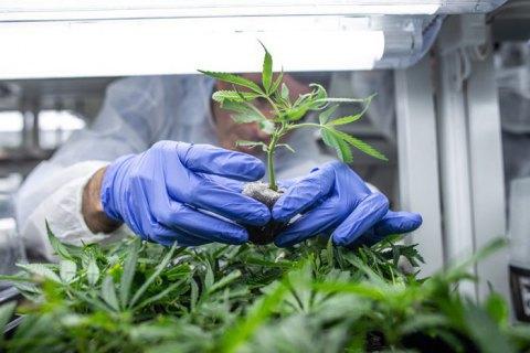 Більш ніж 100 депутатів запропонували легалізувати медичну марихуану (оновлено)