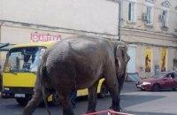 На улицы Одессы вывели слона