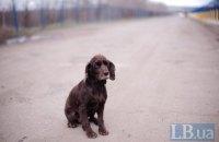 В Ивано-Франковской области мужчина избил собаку, заведено уголовное производство