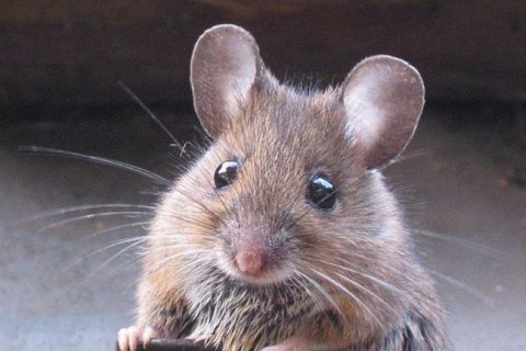 Мыши поели орехов наукраинской таможне на6,5 тысячи долларов