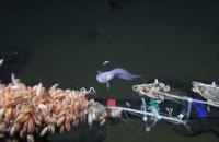 Японські вчені зняли рибу на рекордній глибині 8178 метрів