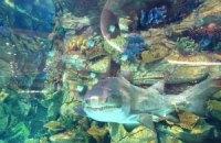 Акула в киевском торговом центре жива (ОБНОВЛЕНО)