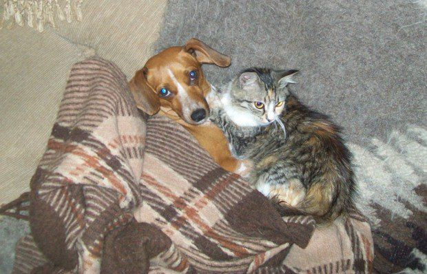 Юрій поділився фотографіями кицьки Умки та собаки Соні