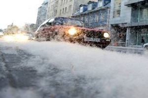 Улицу в центре Риги засыпало пухом