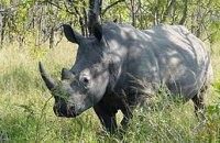 В США умер один из четырех последних на Земле белых носорогов