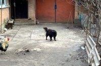 Журналісти показали собаку, яку нардеп Брагар радив продати для оплати комуналки